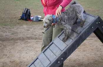 dog-agility-equipment-006